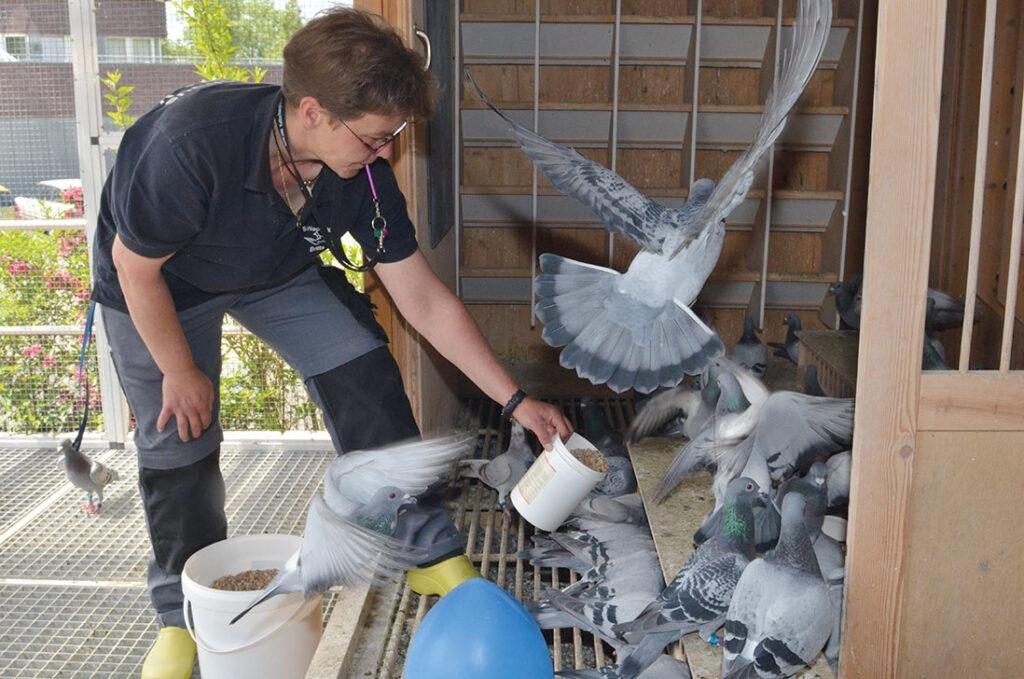 Versorgung der Tauben